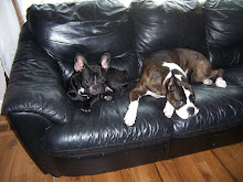 Toby and Ivy living life on the couch!