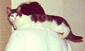 [carol_cat_shoulder.jpg]