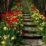 Flores no caminho...