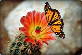 http://1.bp.blogspot.com/_lm9AVR1VqZ4/TU_IwiGGdwI/AAAAAAAAAZg/wcAbTNlF9ak/s1600/bunga-cactus2.jpg