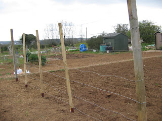 runner bean fence