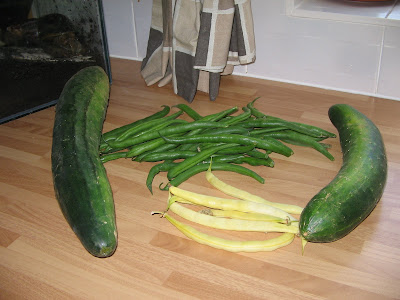 cucumbers and green and yellow beans