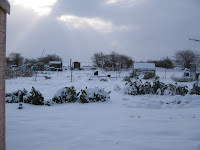 snowy allotments