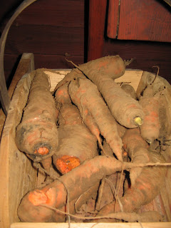 over wintered carrots