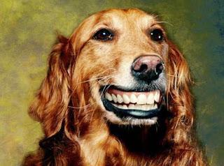 http://1.bp.blogspot.com/_lnqIJpYW0zI/SKIJjo1OlrI/AAAAAAAAB_Q/wL2KLqpBHMA/s320/funny_animals_158+%28say+CHEESE%29.jpg