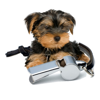 help my yorkie potty training not working. Black Bedroom Furniture Sets. Home Design Ideas