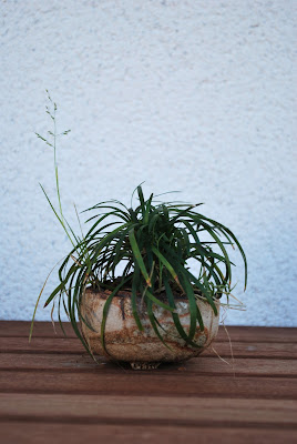 Carpinus macetas artesanales bonsai y kusamono - Macetas barcelona ...