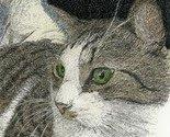 .:: lap cat :.