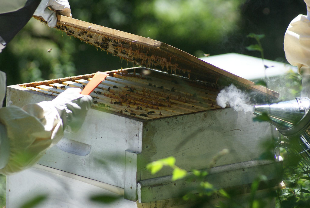 how to become a beekeeper manitoba