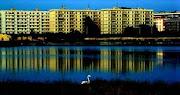 urbanitas e parco (di Molentargius )