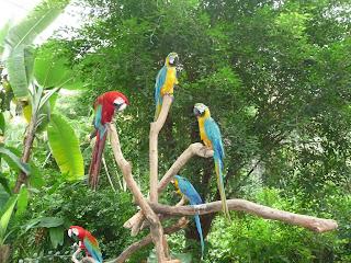 Sentosa Island - Butterfly Garden