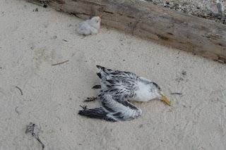baby bird and dead mommy bird