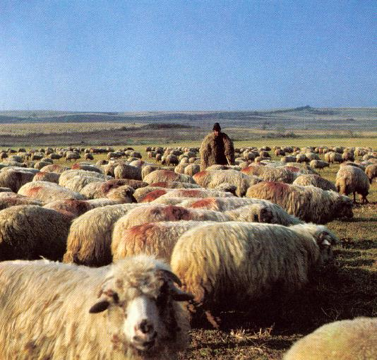 [shepherd-and-flock1.jpg]
