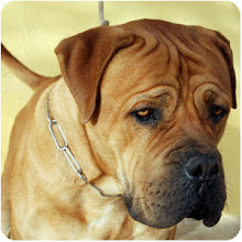 KΛΙΚ στη  σωστή και υπεύθυνη εκπαίδευση σκύλων