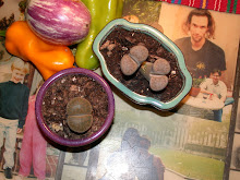 Lovely Lithops