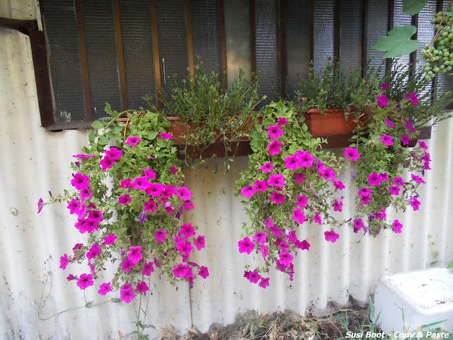 floreiras coloridas