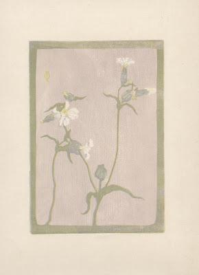 Lichtnelke, Farbholzschnitt, um 1930