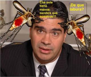 Les moustiques attaquent