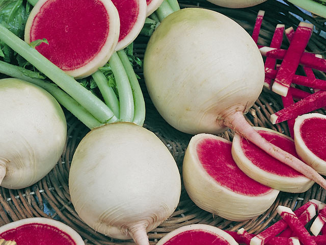 The Watermelon Radish