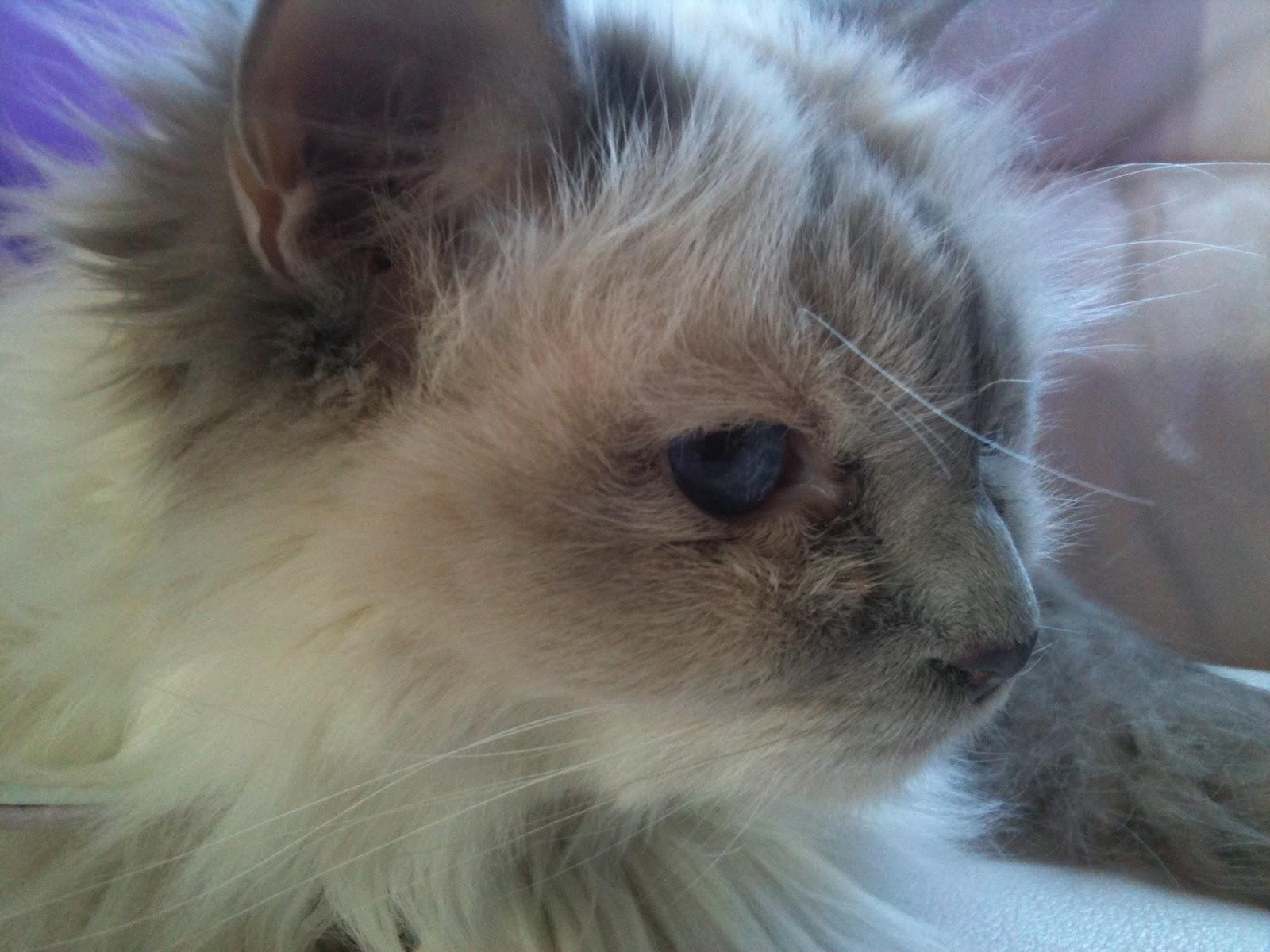 Oatie's Mum's Cat