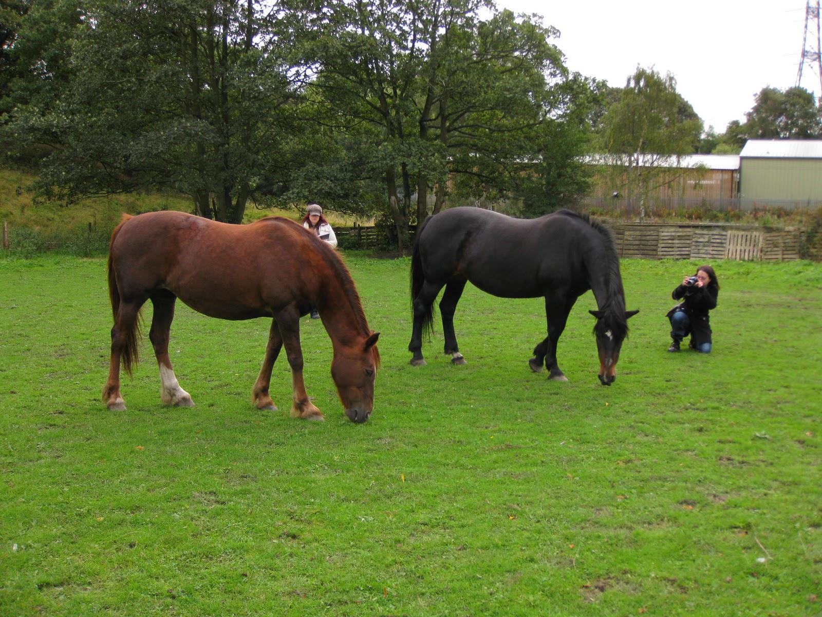 http://1.bp.blogspot.com/_m10ZmUU_m2Q/TKMC1J2IFNI/AAAAAAAACTc/egFFhU3M9LU/s1600/10+09+coldstream+cut+nidderdale+and+horses+033.jpg
