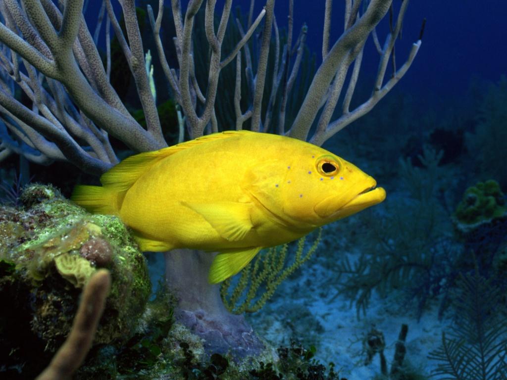 http://1.bp.blogspot.com/_m1Z6uxpmlU8/TPXnLG7wgzI/AAAAAAAAC54/C_ZNCsYjCHk/s1600/underwater-life-39-1024x768.jpg