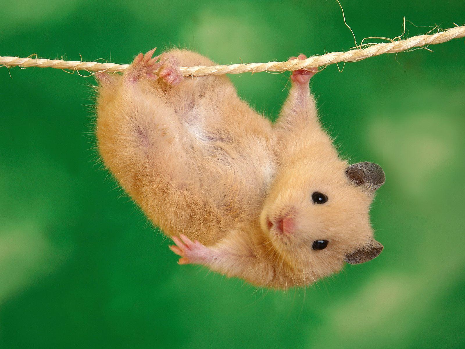 http://1.bp.blogspot.com/_m1Z6uxpmlU8/TSXmHHN1ICI/AAAAAAAADCc/JPm12IjczGs/s1600/animal_0026.jpg
