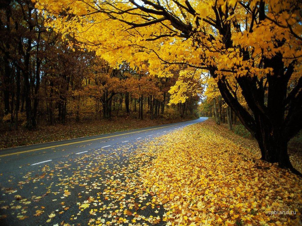 Народные приметы осень