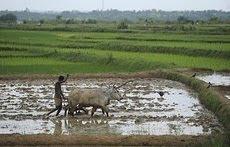 န Sonarpur, 12 August :