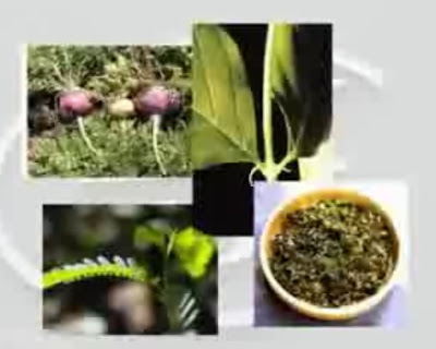 herb supplements