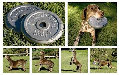 Iams-pet-dog-food-print-ad3