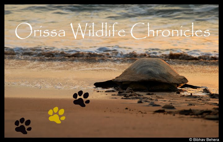 Orissa Wildlife Chronicles