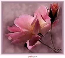 Quer ficar tranquilo contemple uma flor !
