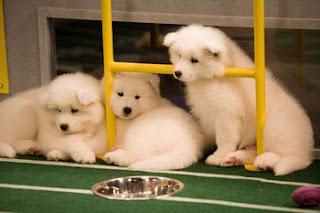 Yay! Puppies!