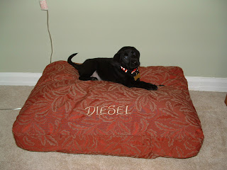 Diesel's first day on his old bed