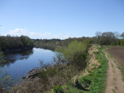 River Tyne: Newburn to Wylam