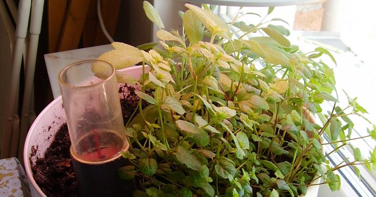 Indoor gardener grow light for beginners for Indoor vegetable gardening beginner