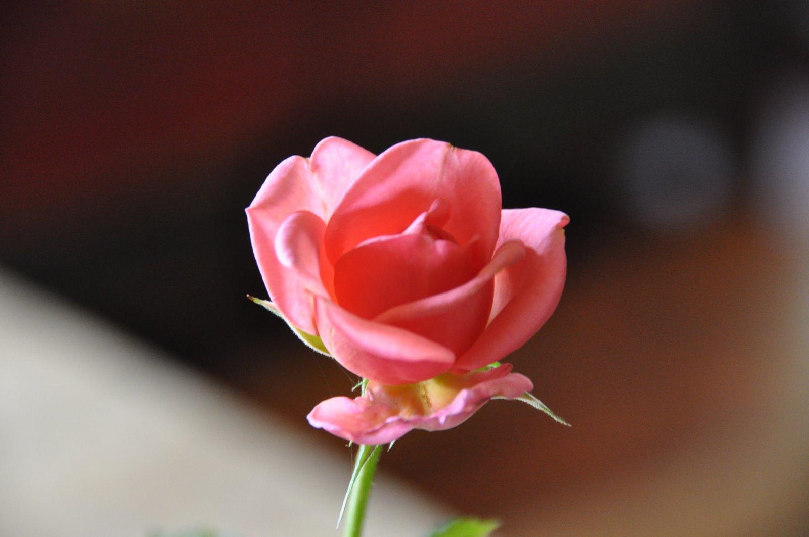 Joli Minois Et Jolie Fleur