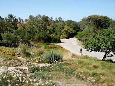 A Walkabout Through The South Coast Botanic Garden, California