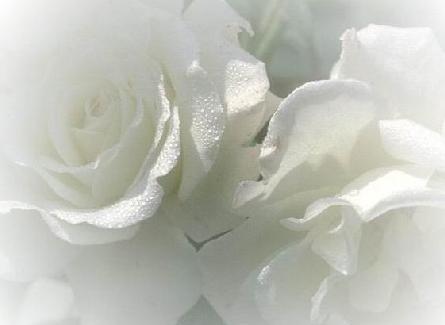 http://1.bp.blogspot.com/_mASZKAD-fv0/TMI2UiuWKPI/AAAAAAAAB-g/9a4amIKRgy4/s1600/RosasBrancas.jpg