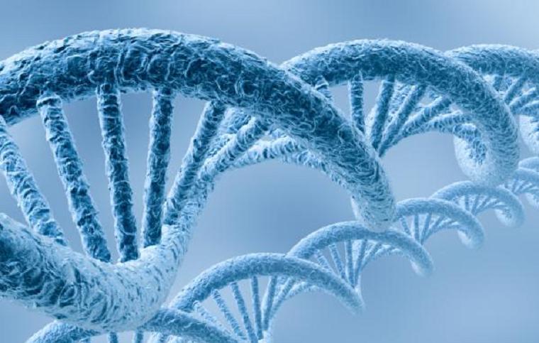 Aplicações da genética