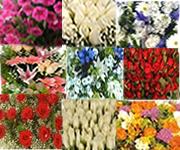 Çİçek Sepeti