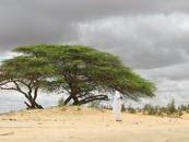 SOS SAHEL INTERNATIONAL