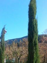 JANUARY TREE