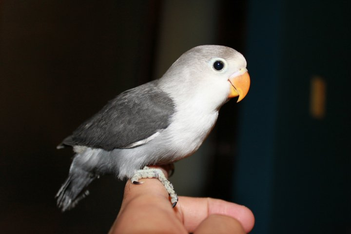 Watta Bird!: June 2010