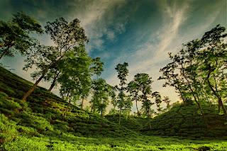 [Tea+Garden.jpg]