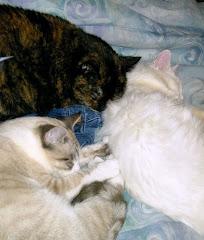 My 3 Fur-Babies