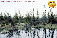 """Drunken forests"" caused by melting permafrost"