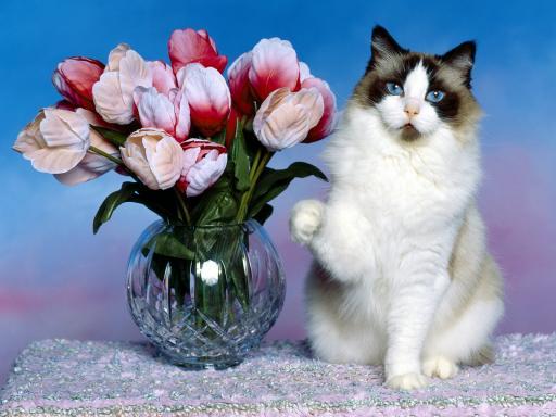 http://1.bp.blogspot.com/_mGbq-AZkhJc/TU2jhs5QN3I/AAAAAAAAADg/p1FyagJNeRU/s1600/cat+with+much+beautiful+picture.jpg