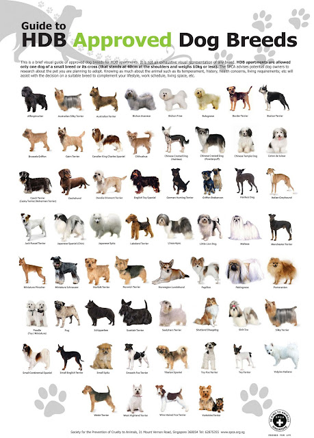 dog breeds list with pictures. HDB-approved Dog Breeds